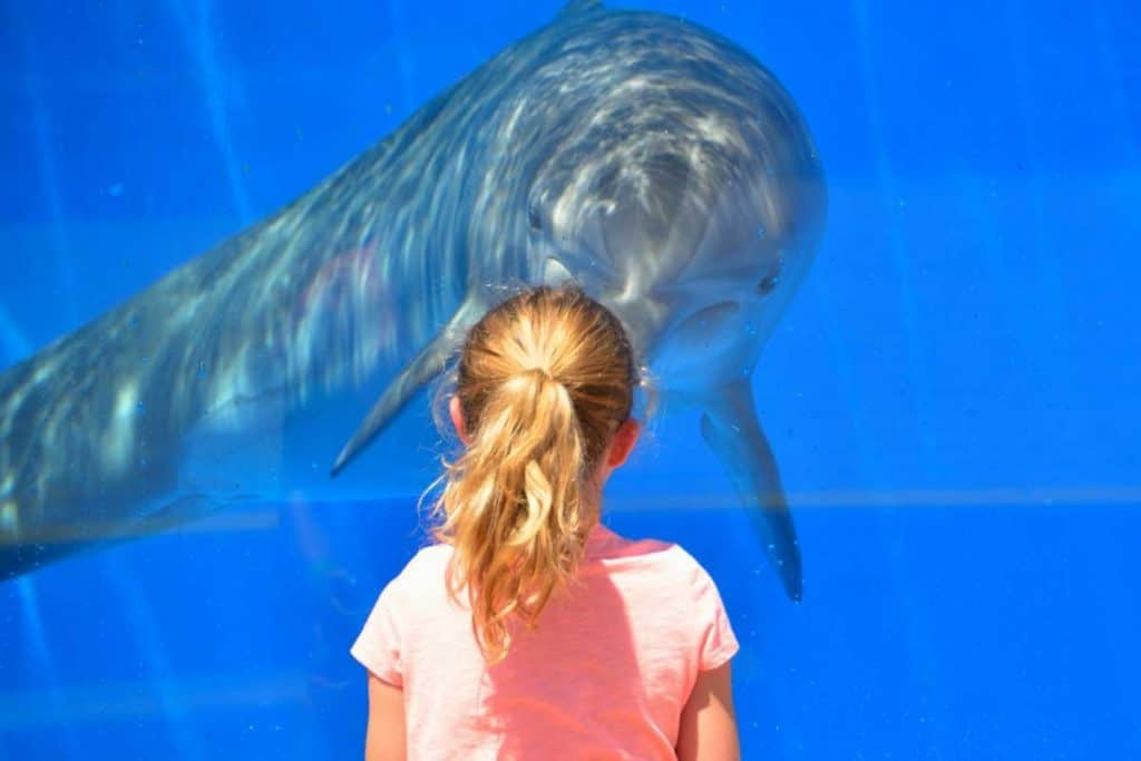 Girl watching dolphin